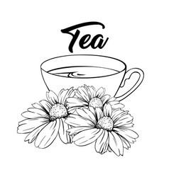 Porcelain tea cup with chamomile tea isolated vector