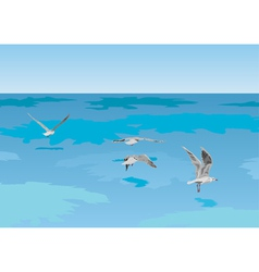 Seagulls over sea vector