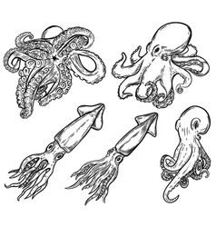 Set of hand drawn octopus and squid isolated vector