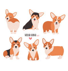 Set of welsh corgi in different postures small vector
