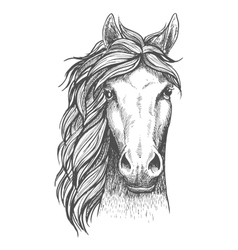 Sketched arabian purebred horse with alert ears vector
