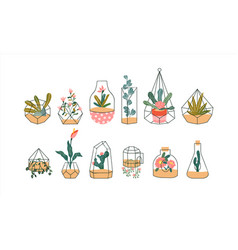 terrarium plant set tropical houseplant flowers vector image
