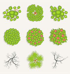 trees in top view set of green and burnt vector image
