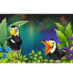Two birds at the rainforest vector
