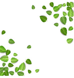 flying green leaves on white background spring vector image