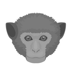 monkey icon in monochrome style isolated on white vector image