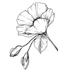 Rosa canina flower black and white vector