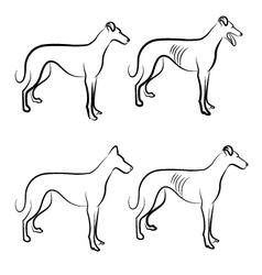 Greyhound dogs logo vector image