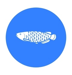 Scleropages fotmosus fish icon black Singe vector
