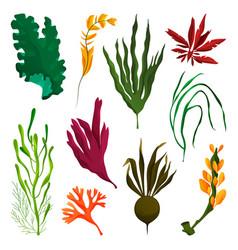 Seaweed or kelp elements water plants set vector