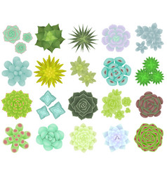 Set different types succulents vector