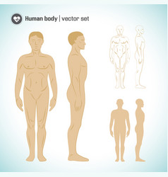 male body set vector image
