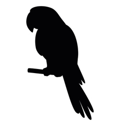 parrot on a pole silhouette vector image