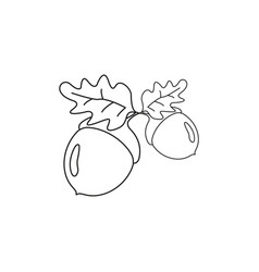 acorn of strong oak icons of white vector image