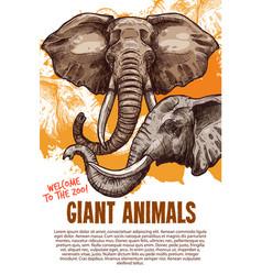 African animals elephants zoo poster vector