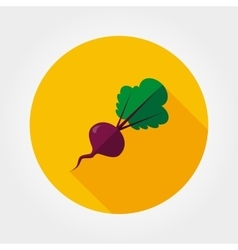 Beetroot vegetable icon vector