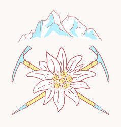 edelweiss alpenstock mountains flower symbol vector image