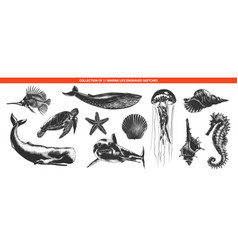 engraved style sea life animals collection for vector image