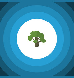 Isolated oak flat icon tree element can be vector