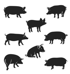 Quality silhouettes pigs black vector