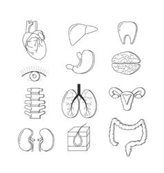 set human body organs anatomy design vector image