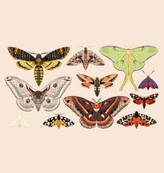set of moths and butterflies vector image