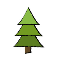Drawing pine tree forest natural environment vector