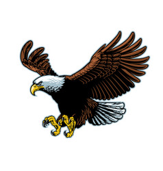 flying bald eagle in detailed style vector image