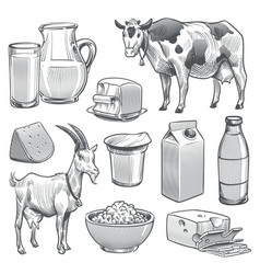 hand drawn dairy products farm cow and goat milk vector image