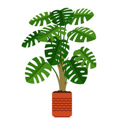 Monstera houseplant in ceramic pot vector