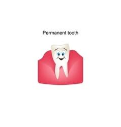 Permanent teeth in the gums Children cartoon vector