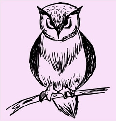 owl tree branch vector image
