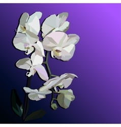 White geometric orchid vector image