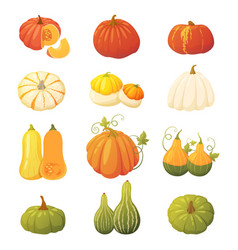 Colorful pumpkin set vector