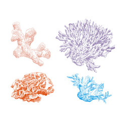 corals hand drawn set vector image
