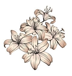floral blooming lilies hand drawn vector image