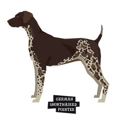 german shorthaired pointer isolated object vector image