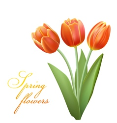 realistic tulips vector image