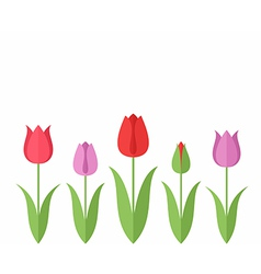 Tulip Set vector