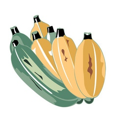 green and yellow bananas leave vector image
