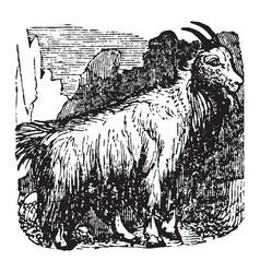 Mountain goat vintage vector