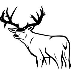 whitetail deer vector image