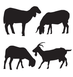 Sheep and goat silhouettes vector image vector image