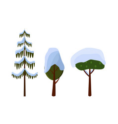 tree evergreen trees covered with snow winter vector image