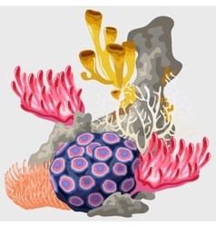 Element reef with different corals vector