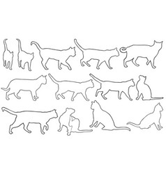 set of different cats vector image