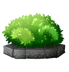 A plant above a stone vector