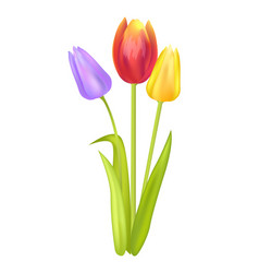 colorful bouquet with three tulips of multi color vector image