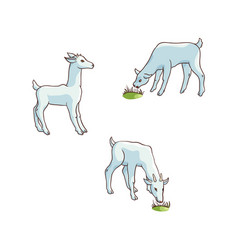 Flat cartoon goats grazing isolated vector