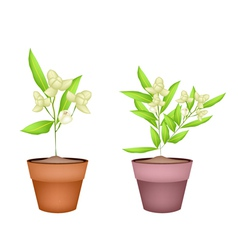 Two ylang ylang flower in terracotta pots vector